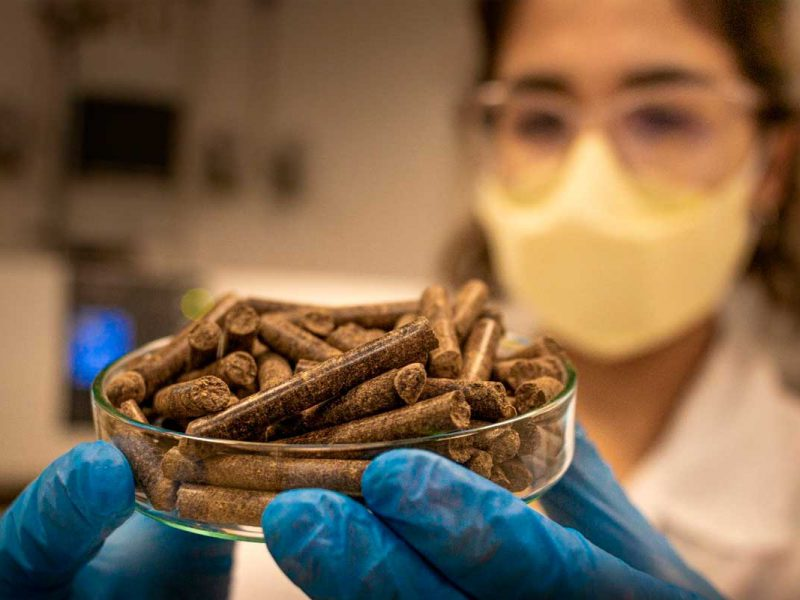 Cientista segurando briquetes, pallets feitos com casca de côco