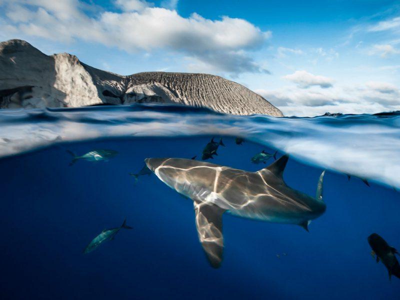 Tubarão nadando próximo a superfície