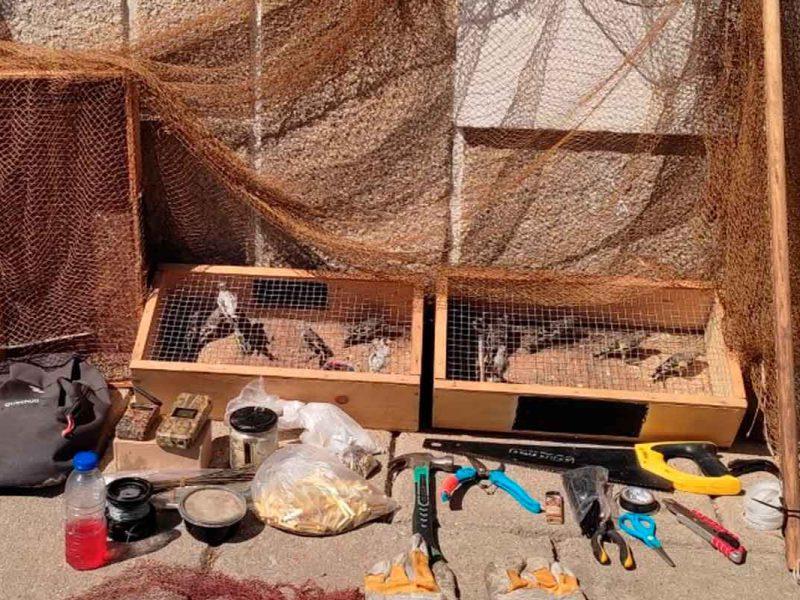 Pássaros presos em armadilhas
